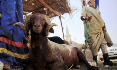صورة أرشيفية لسوق الإمام للمواشي والأغنام بمنطقة مصر القديمة -رويترز